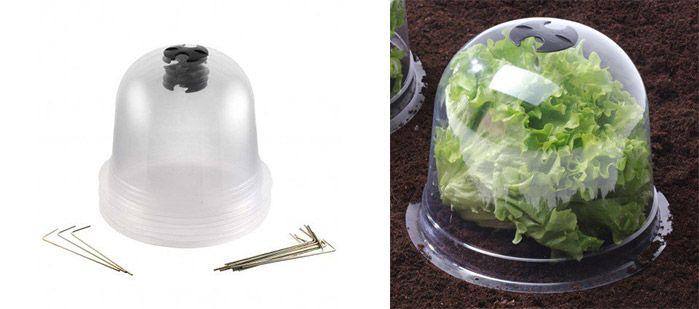 Cloche à salade ou cloche victorienne