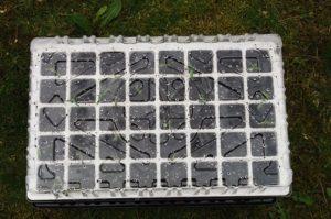 Couvercle transparent de kit germination pour semis