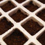 Godets remplis de terreau - Kit de germination