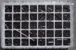 Kit de germination intérieur - Condensation