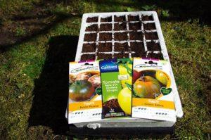 Graines de tomates pour semis sur kit de germination